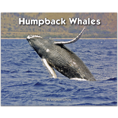 Detailed view of Humpback Whales