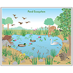 Pond Ecosystem Poster